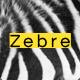 Download Zebre - Minimal, Agency & Porfolio WP Theme from ThemeForest