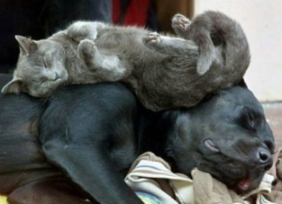 Tired Cat and Dog