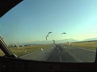 黒山の空港でA320に大量バードストライク7ヒット。そのコクピット映像。