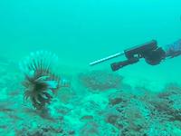 ありそうでなかった。水中で拳銃を発砲して魚を仕留めるグロックフィッシングのビデオ。