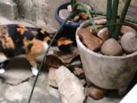 ネコ働けやwwwネズミ退治でネズミの方が一枚も二枚も上手だった動画www
