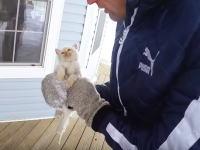 雪の中で半分凍りかけていた子猫を救った家族のものがたり。