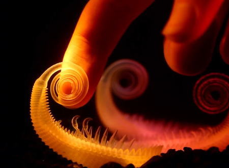 3Dプリントされた水中植物がまるで生きているかのように揺れ動く作品「Hydrophytes」