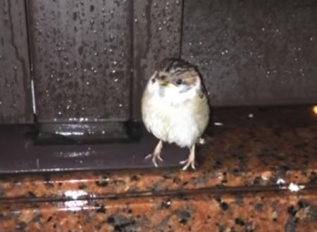 スズメかわいい!台風に怯えていたスズメを自宅に連れ帰って保護した動画にほっこり。