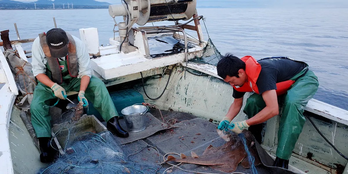 Fishing-at-sea-of-japan_feature-image