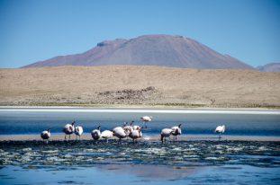 Laguna Hedionda, Boliwia