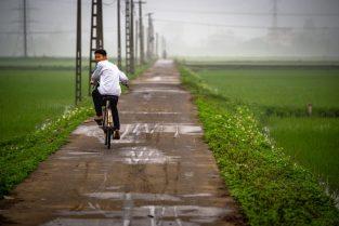 Pola ryżowe, Wietnam