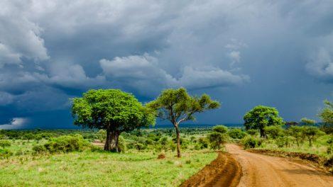 Park Narodowy Tarangire, Tanzania