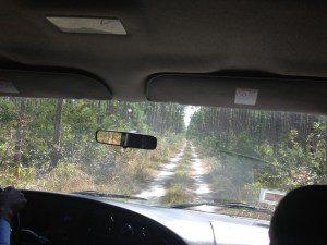 The road to Uncle Charlie's blue hole
