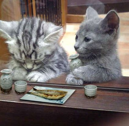 gkojax:   biccchi:   appbank:   takeoba:   ak47:   xyo:  ねたミシュラン ★まぁ、人生良い事ばかりじゃないさ。元気出せよ!