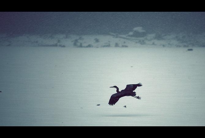 Horizon lines and birds… Photographer Nicolas Bouvier