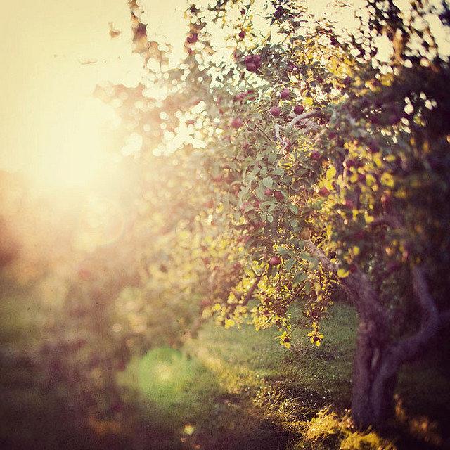 Nature Photos by Irene Suchocki