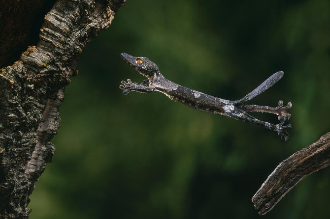 Stephen Dalton's stop-motion flying wildlife photography