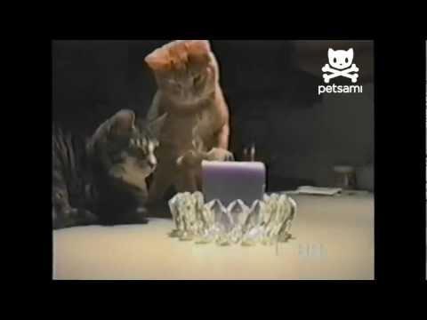 Cat Swipes Candle