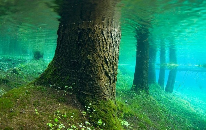 Submerged Forest
