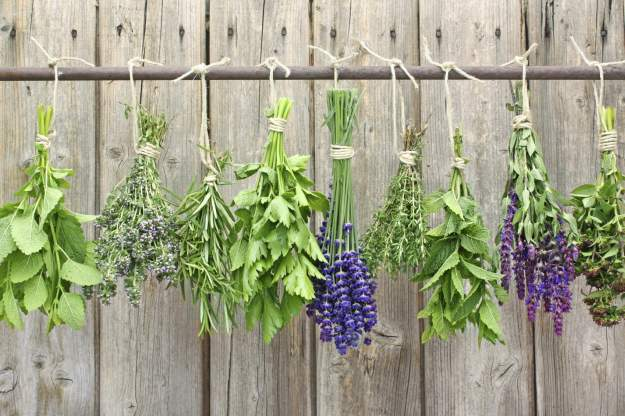 How To Grow Your Own Herbs | 133 Homesteading Skills for Beginners