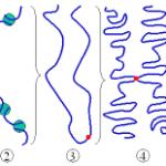 chromin fiber