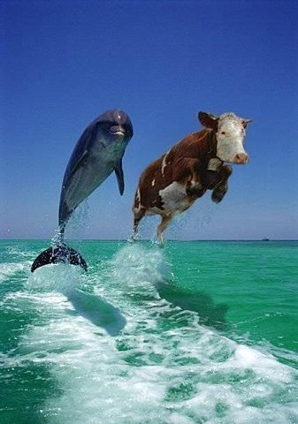 GetAmused.com - Cow and Dolphin