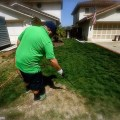 Keeping Up Appearances: Californians Spray Painting Grass Green