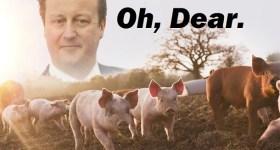 1-David-Cameron-Pig