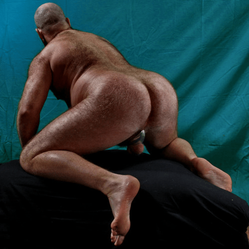 fat hairy bears