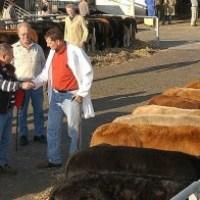 Mittwoch ist Viehmarkt!