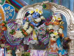 deity-darshan-at-iskcon-bangalore-sri-jagannath