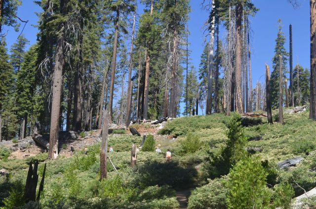 Forest Fire Damage