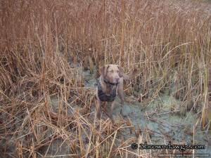 Thunder In The Marsh