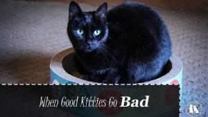 Good Kitties Go Bad