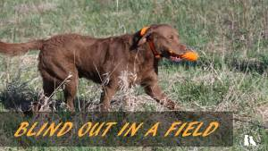 Blind Out In A Field