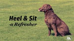Heel & Sit A Refresher