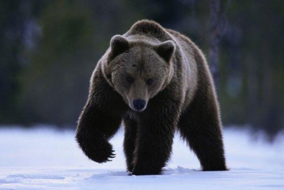 北海道で駆除された400kgのヒグマ(画像)デカすぎ∑ヾ( ̄0 ̄;ノ