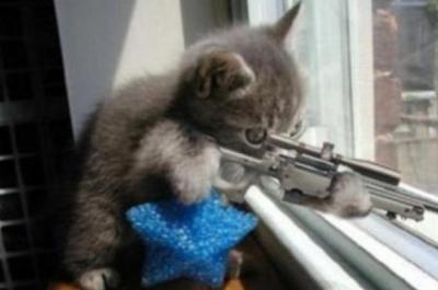 ニャロリストがG20サミットに乱入 厳重なセキュリティを突破して現れた3匹のネコの映像が話題に ※動画アリ※