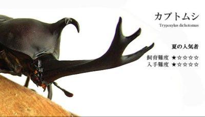 日本のカブトムシ強すぎwwwwww ※動画※