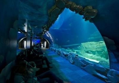 パリの水族館 カップルの愛がさらにフカまりそうな宿泊施設を提供<動画像>フランス