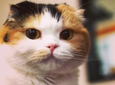 三毛猫好きなヤツ集まれ~♡  ※画像※