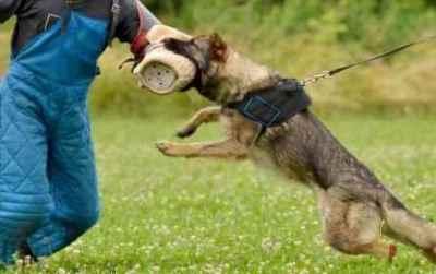 警察犬スゲエ!たった10分で不明女性を発見!