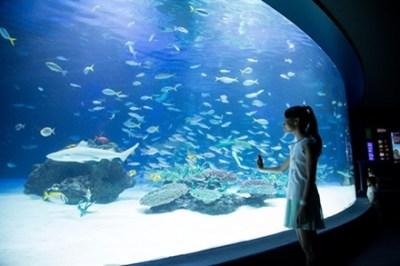 魚が1235匹死んだサンシャイン水族館の現在<画像>大水槽の悲壮感がすごい