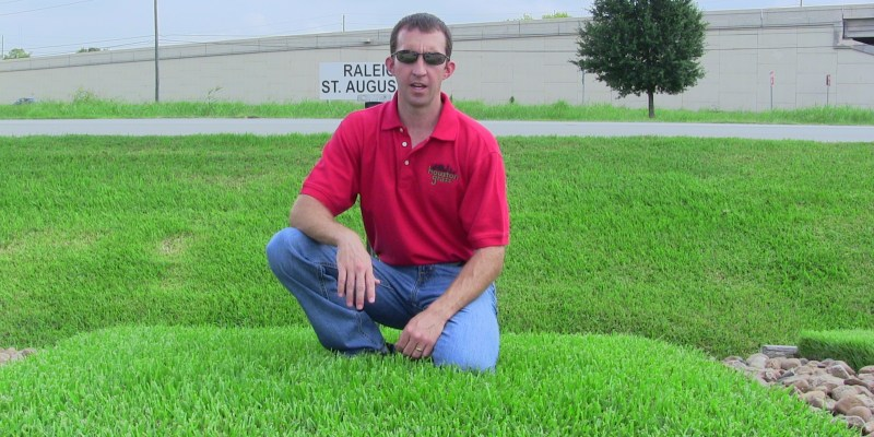 Large Of St Augustine Sod