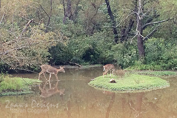 http://i2.wp.com/2pawsdesigns.com/wp-content/uploads/2015/09/Lake-Lynn-Deer-Sept2015.jpg?resize=600%2C400