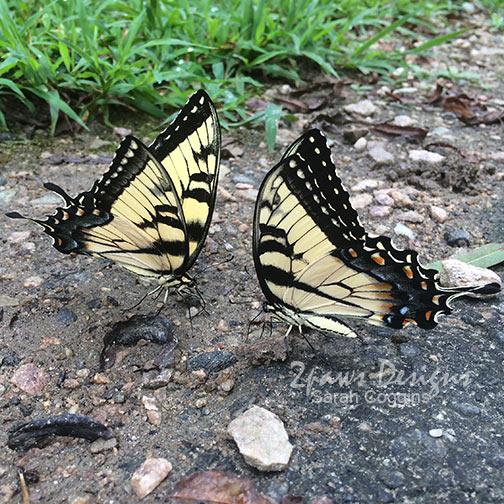 Project 52 Photos: Week 32 – Butterflies