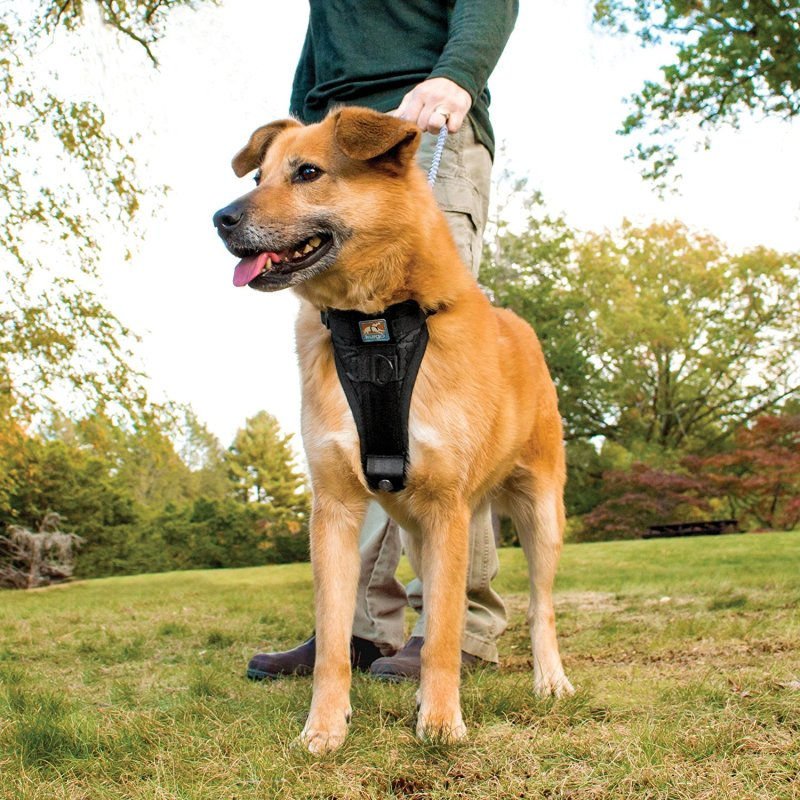 Large Of Best Harness For Dogs