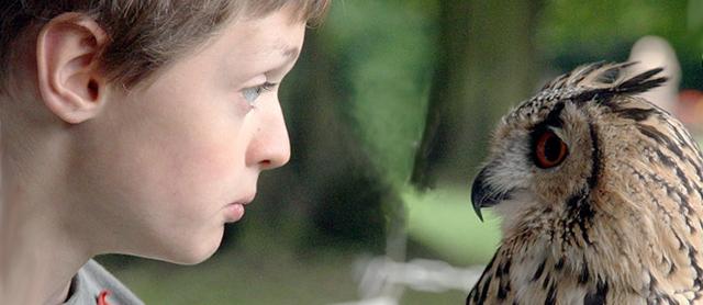 boy looks owl in the eye
