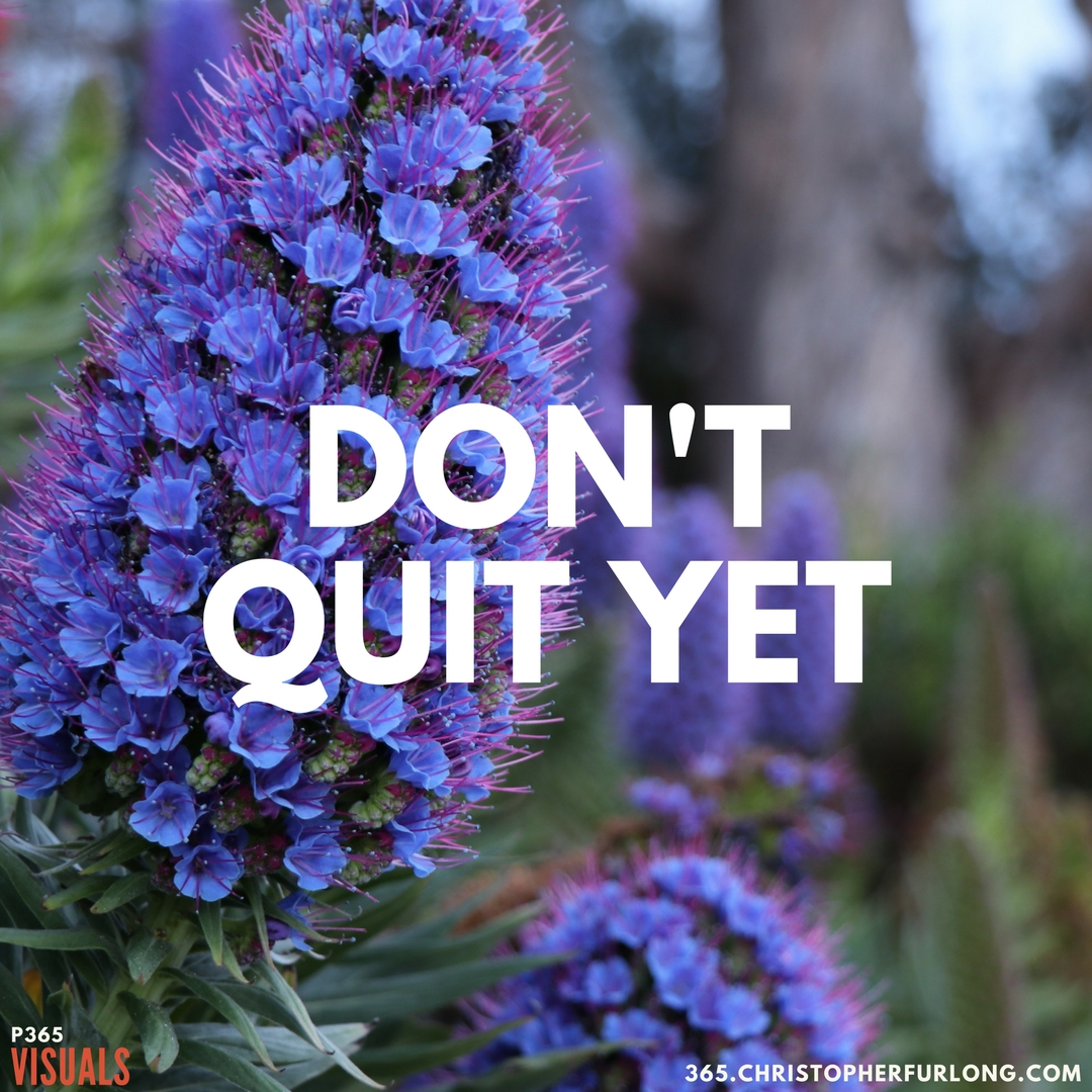 Day #270: Don't Quit Yet!