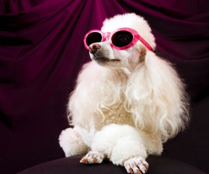 Post - Pamper Your Pooch Photo Contest - Facebook