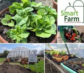 Smart Farm Plant Sale