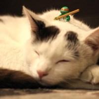 It's a Cat Weekend: Lego TMNT