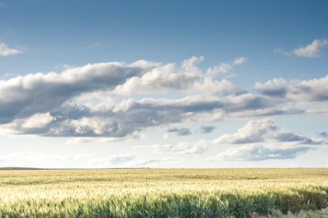Nebraska wheat field