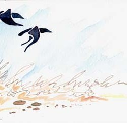 "Calligraphic Blackbirds 10"" x 7"""